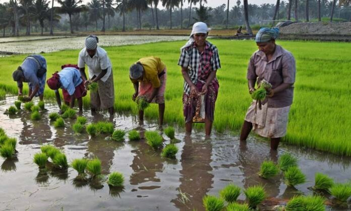 Neglect of agricultural labourers